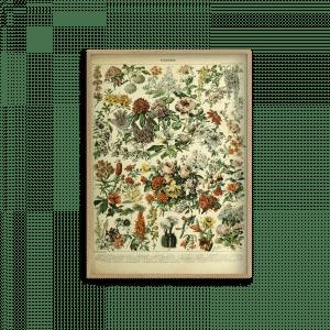 , ADOLPHE MILLOT FLOWER – FPPLC0290, Design Lab